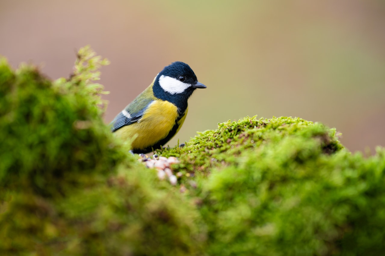 Fotografisanje ptica